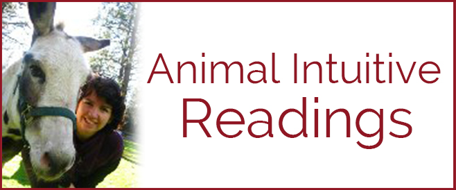 Animal Intuitive Readings