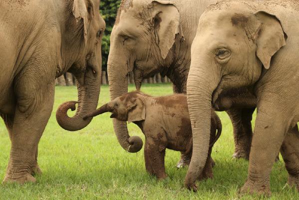 elephant herd ENP